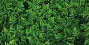 gold-leaf-botanicals-bg